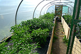Chilli Tunnel
